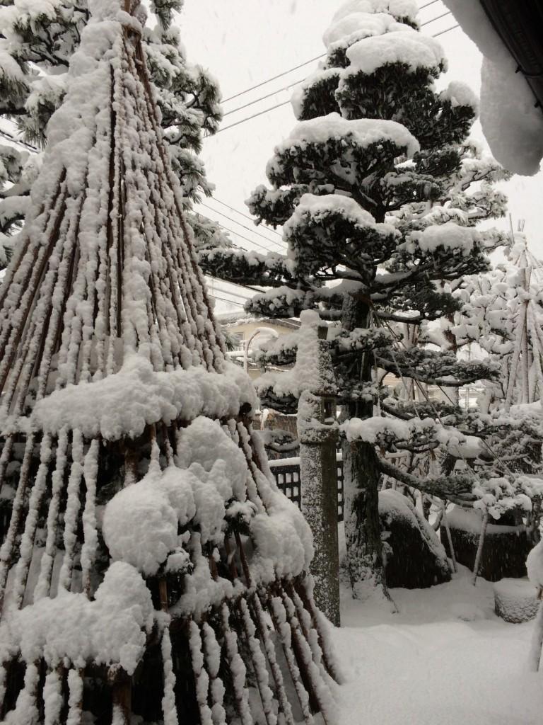 長岡市も大雪。雪囲いの風情、余裕なし04